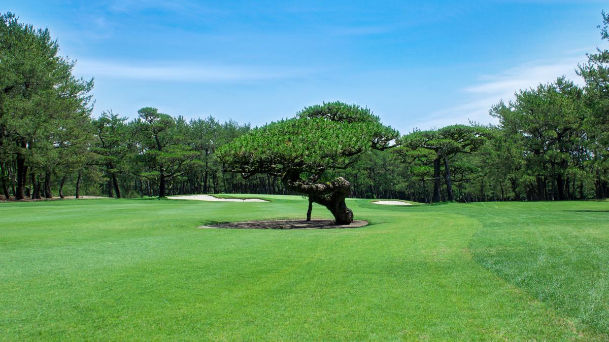 フェニックスカントリークラブ ゴルフ
