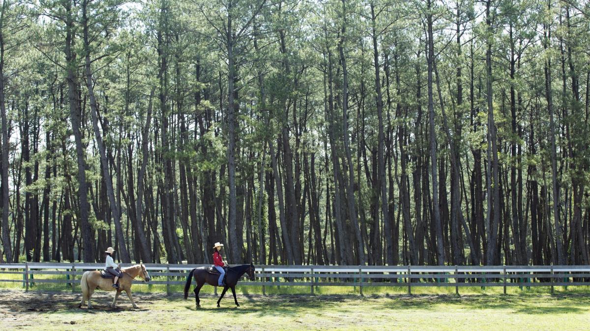 黒松林で乗馬 × エクレア