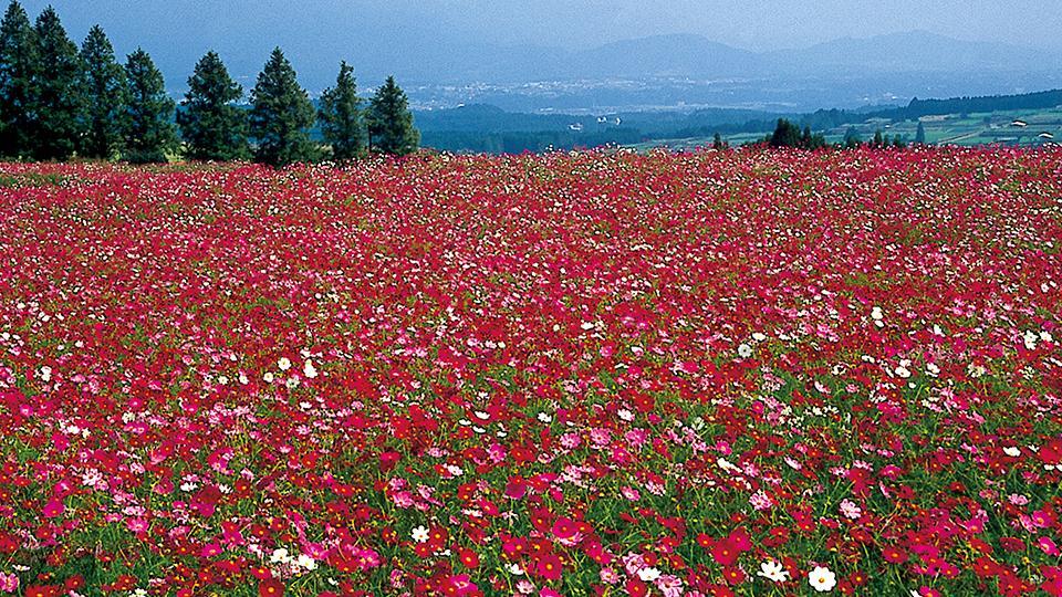 「生駒高原」