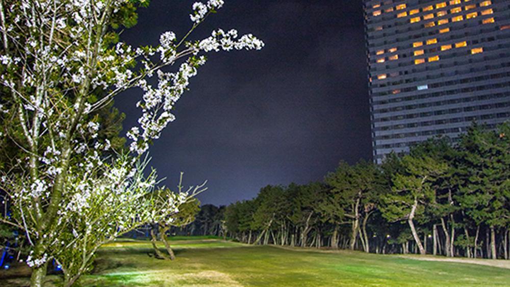 トム・ワトソンゴルフコースの桜