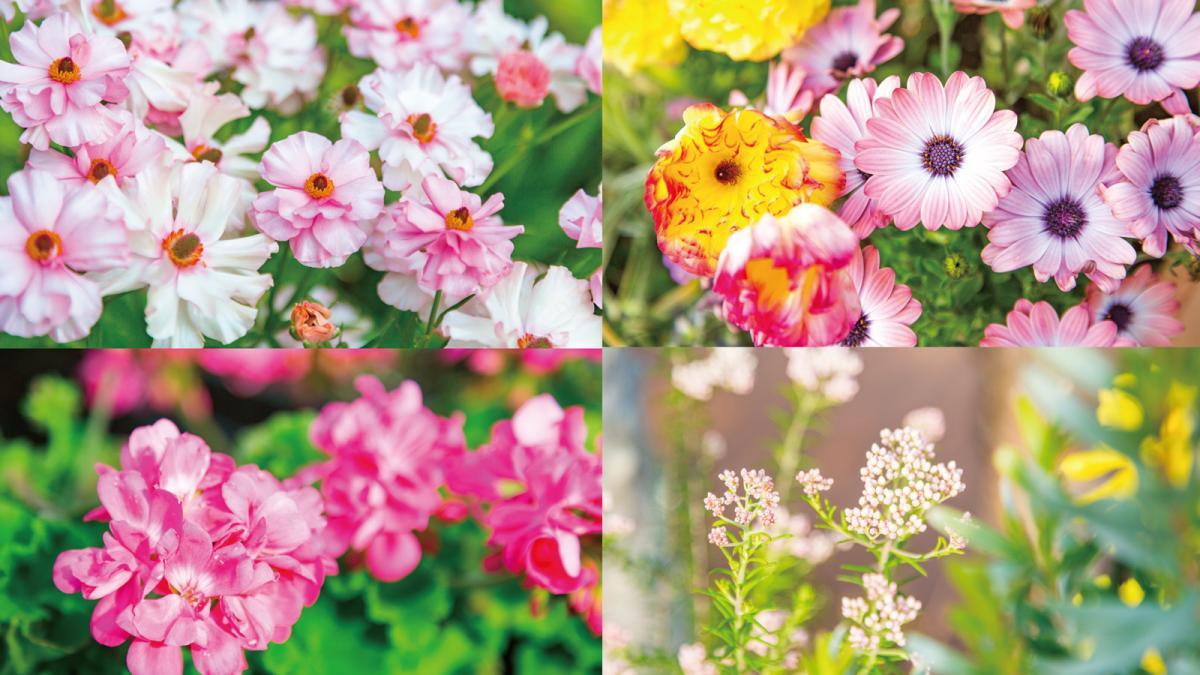 「宮崎園芸」が手がける花々