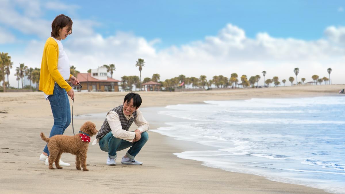 ペットとサンビーチ一ツ葉