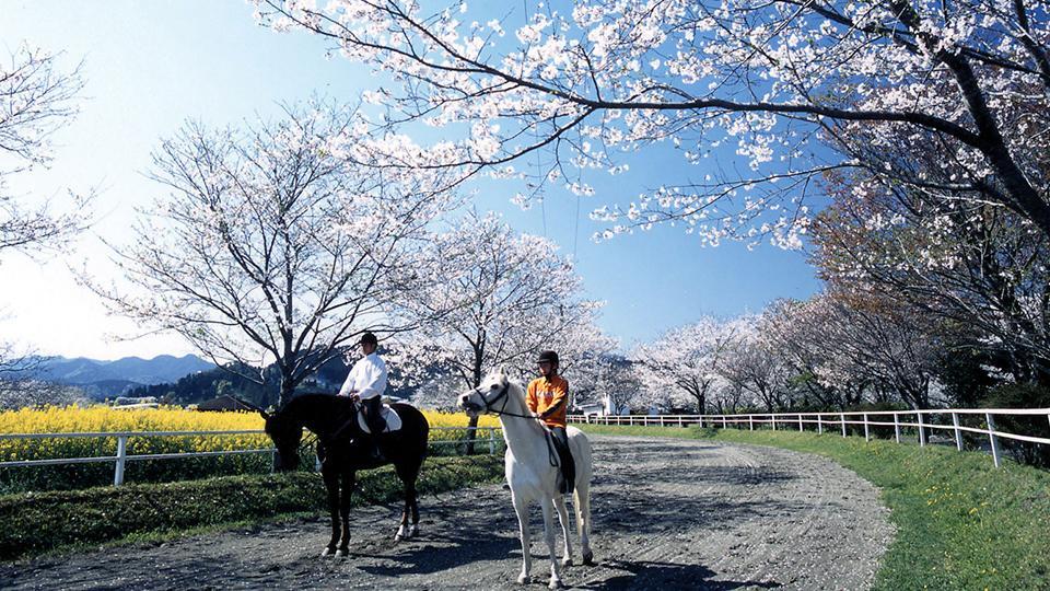 みやざき春の観光スポット