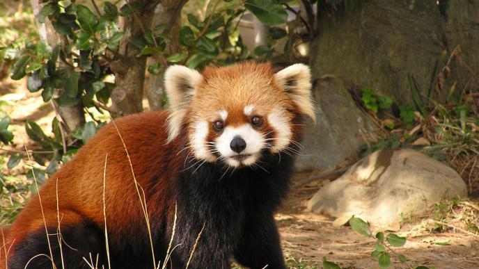 宮崎市フェニックス自然動物園