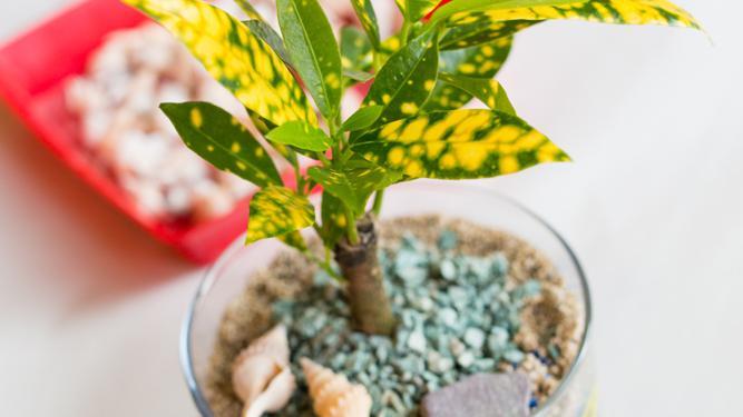 植物アート体験