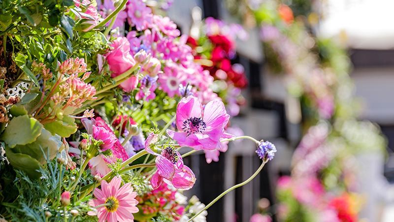 FLOWER LIVING