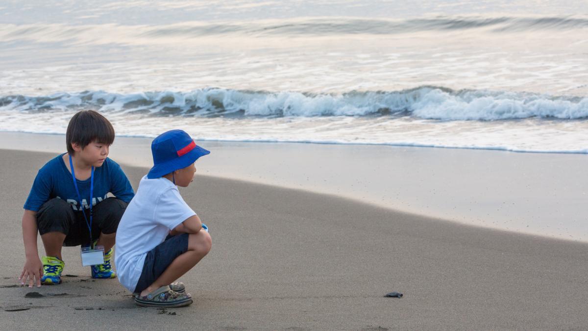 シーガイアの夏休み2019新富町で「ウミガメの生態を学ぶ」3
