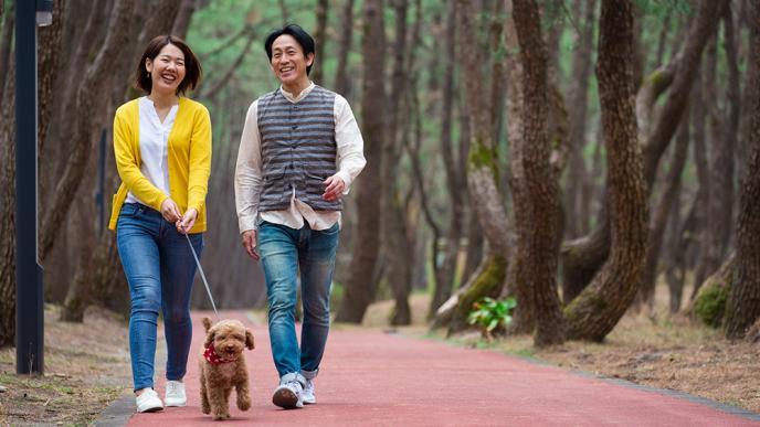 松林の遊歩道をペットとお散歩